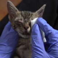 Rescuing a Blind Street Kitten