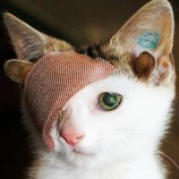 Rescue Kitty With 4 Ears And One Eye Escapes Misery After Finding His Forever Home