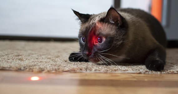 cats and laser pointers