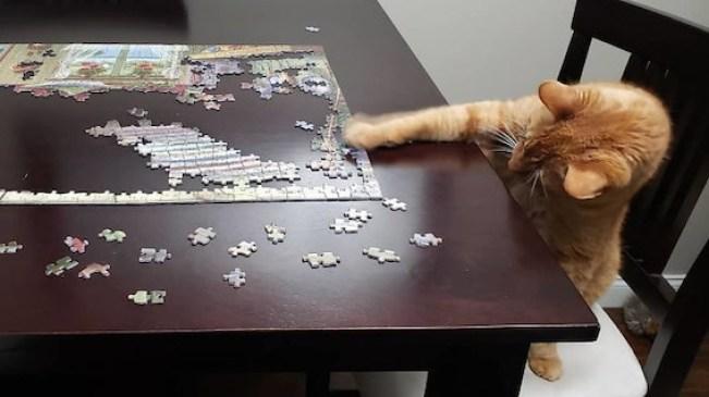 puzzle-14