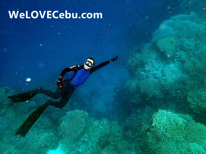 Freediving in Cebu: Learning How to Fly Underwater