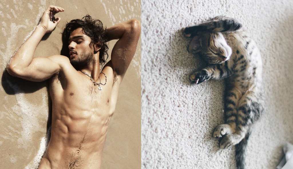 hot men with kittens tumblr