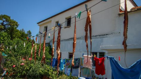 Squid and clothes hung out to dry