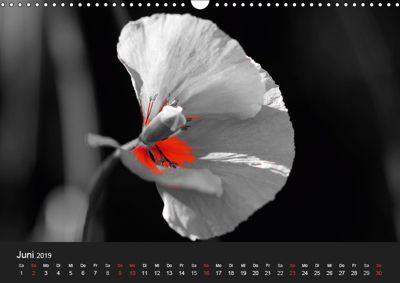 Schwarz Weiß Trifft Farbe Wandkalender 2019 Din A3 Quer