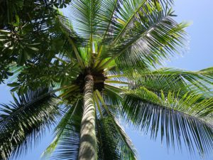 palme-300x225