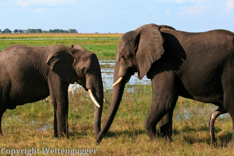 Best of Botswana-1