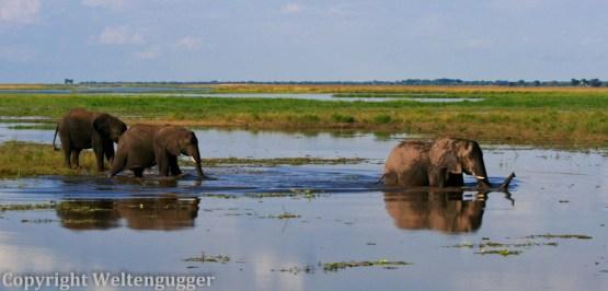 Best of Botswana-4