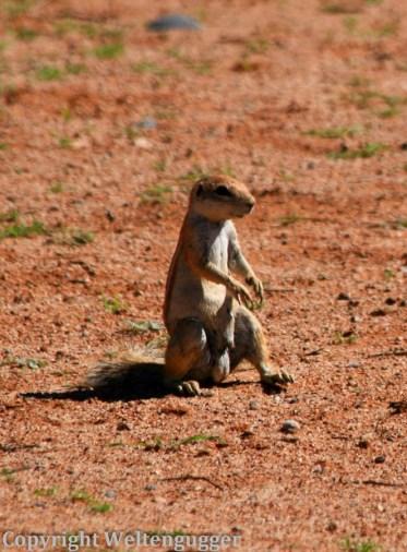 Namibia-089