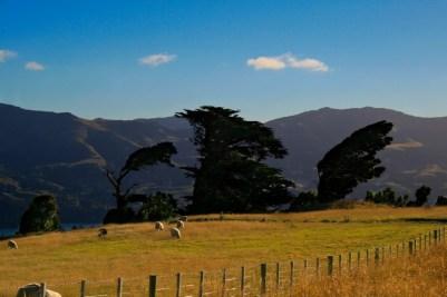 Neuseeland-236