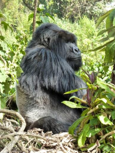 Ruanda-20