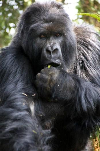 Ruanda-24