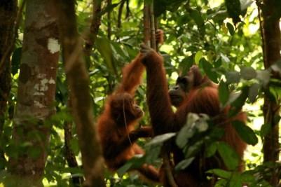 Sumatra (46 von 80)