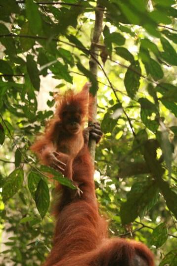 Sumatra (50 von 80)