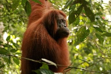 Sumatra (51 von 80)