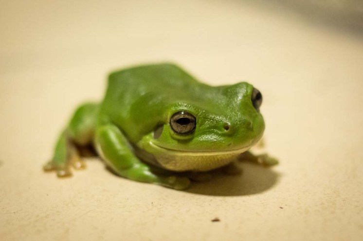 Visit of the tree frog