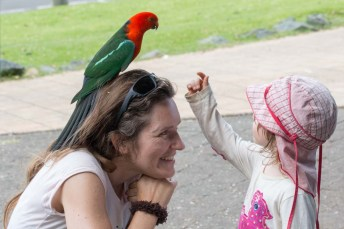 Mama, there is an Australian King Parrot sitting on your head