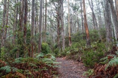 Primal forest at Cape Raoul