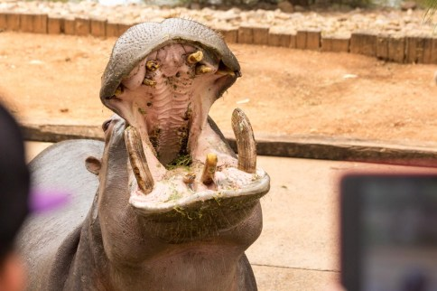 Deep insight into a hippo