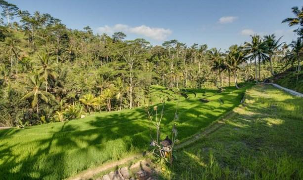 Bali's rice terraces