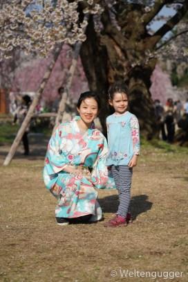 Japanese girl kimono cherry blossom