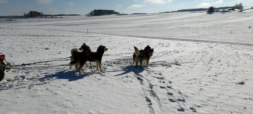 Waldviertel: Unterwegs mit dem Hundeschlitten