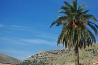 ... an das Massiv des Monte Gallo, das vor kühlen Winden schützt.