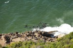 Heute bevölkern Robben den Strand