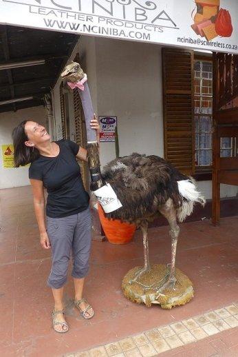 Die Tiere sind an allen Ecken in Oudtshoorn zu finden