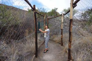 Zoo umgekehrt – Die Tiere beobachten die Menschen im umzäunten Camp des Nationalparks