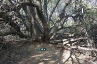 Die Wanderwege sind zwar gut markiert, aber manchmal bleiben Zweifel. Hier geht es geradewegs durch den Baum.