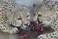 Wenn die Tiere Futter haben, kann man mit ihnen (fast) machen was man will.