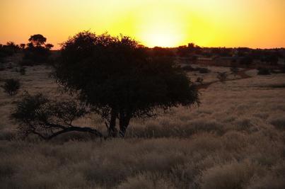 Im Sonnenuntergang leuchtet das helle Gras wie ein weicher Flaum.