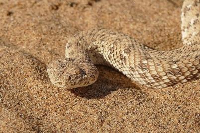 Neugierig mustert die Schlange die Umgebung...