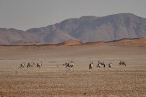 Im Westen die Namib-Wüste...