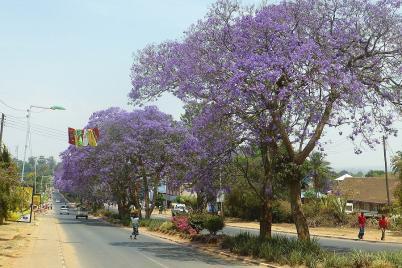 Ganz in Blau präsentiert sich die Hauptstraße in Mzuzu.