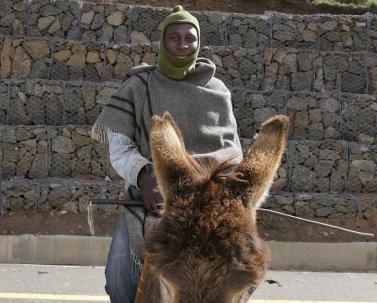 Eigentlich wollten wir dem Esel Vorfahrt gewähren - eigentlich! Esel haben zum Teil ein eigenes Verständnis vom Straßenverkehr.