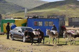 Wenig später wird der Einkauf nach Hause transportiert. Die Tiere haben selbstverständlich Vorfahrt.