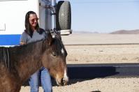 Die Wilden Pferde der Namib sind gar nicht so wild.