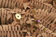 Die Farne am Wegesrand sind dick mit Straßenstaub bedeckt. Schüchtern kämpfen sich einige Blüten durch das Braun.