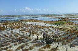 Vor der Küste wird Seegras angebaut. Es ist ein wertvoller Rohstoff zum Beispiel zur Gewinnung von Verpackungsmaterial.
