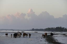 Im Morgengrauen gehört der Strand den etwas anderen Badegästen.
