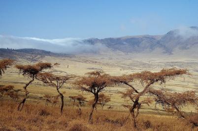 ... um einige Minuten später den Blick auf den Ngorogoro-Krater freizugeben...