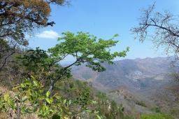 Tiefe Täler und abgeholzte Bergrücken in Zentralmalawi.