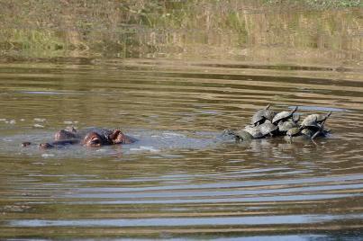 Hippoinseln gibt es wirklich.