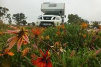 Bei dem Wetter lassen selbst die Blumen die Köpfe hängen ...