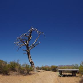 Unterwegs im Outback