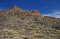 Spinifex - Gras bestimmt das Bild im Outback.