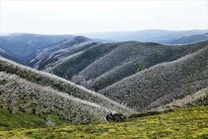 Oberflächlich wirkt es wie Raureif, es ist allerdings Totholz im Hochgebirge.
