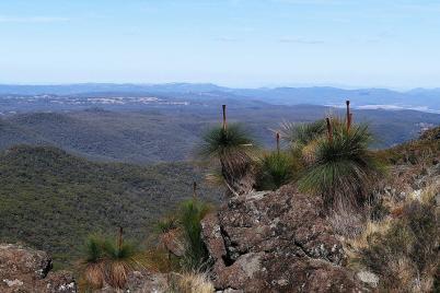 Der schönste Ausblick vom Mount Kaputar ist von Grasbäumen gesäumt.