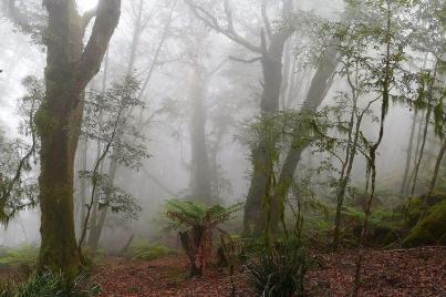 Der stürmische Wind treibt oft die Wolken an die Berghänge des Australischen Gondwana Regenwälder.